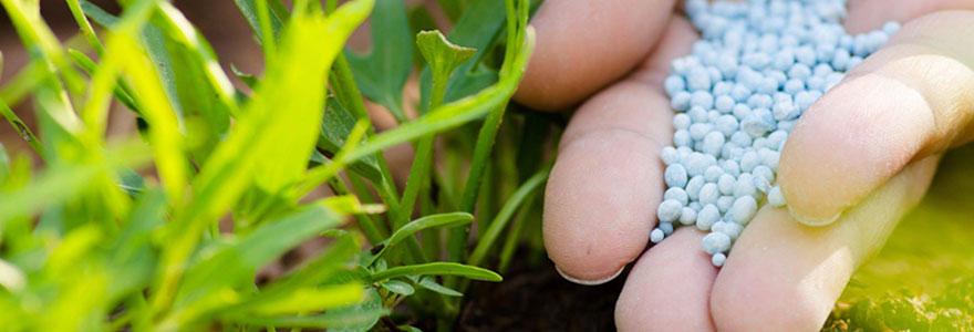 L'azote pour la croissance des végétaux